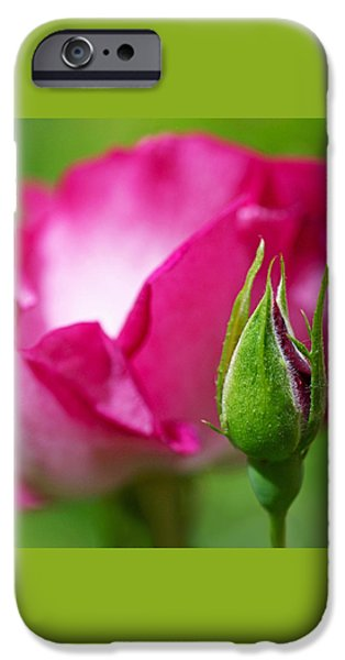 Rosebud iPhone Case by Rona Black