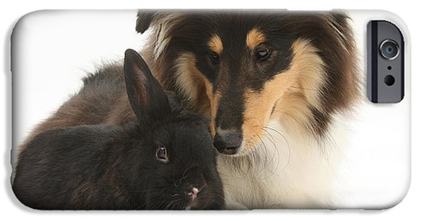 Fauna iPhone Cases - Rough Collie With Black Rabbit iPhone Case by Mark Taylor
