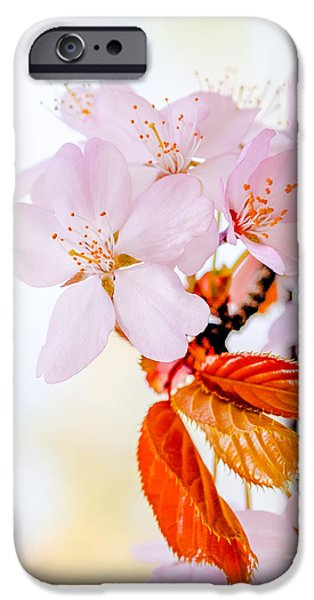 Flora iPhone Cases - Sakura - Japanese cherry blossom iPhone Case by Alexander Senin