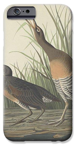 Shorebird iPhone Cases - Salt Water Marsh Hen iPhone Case by John James Audubon