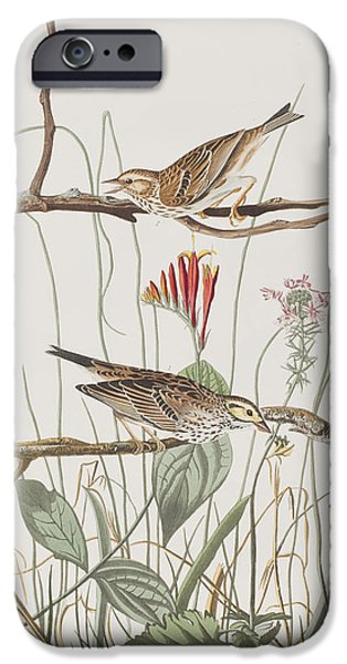 Savannah iPhone Cases - Savannah Finch iPhone Case by John James Audubon