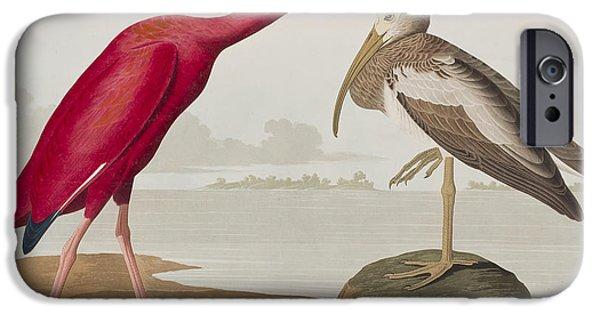 Ibis iPhone Cases - Scarlet Ibis iPhone Case by John James Audubon