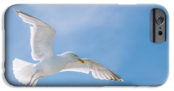 Flying Seagull iPhone Cases - Seagull Flying High iPhone Case by Amanda And Christopher Elwell