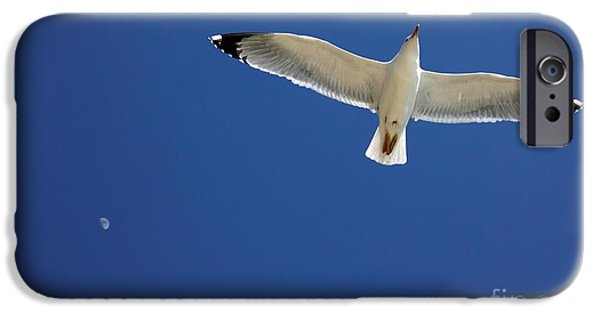 Flying Seagull iPhone Cases - Seagull In Flight iPhone Case by Detlev van Ravenswaay