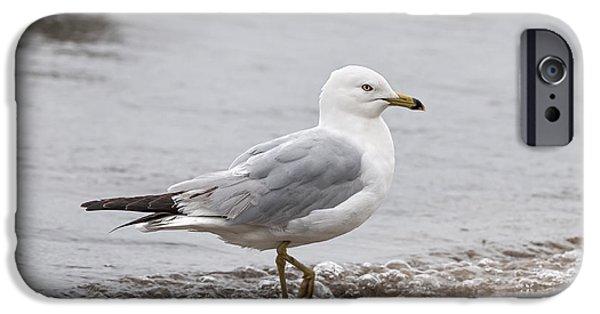 Seabirds iPhone Cases - Seagull on foggy beach iPhone Case by Elena Elisseeva