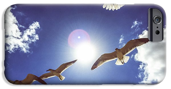 Sea Birds iPhone Cases - Seagulls flying over Miami Beach iPhone Case by Anna Bryukhanova
