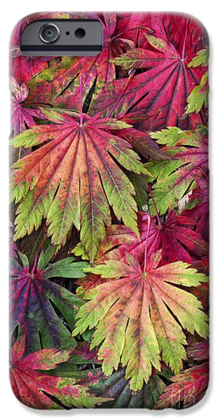 Autumn iPhone Cases - Seasons End iPhone Case by Tim Gainey