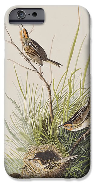 Finch iPhone Cases - Sharp Tailed Finch iPhone Case by John James Audubon