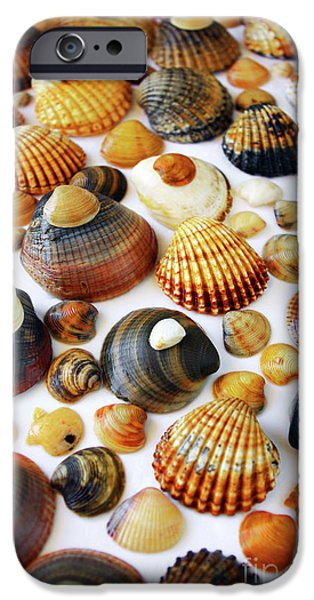 Marine iPhone Cases - Shell Background iPhone Case by Carlos Caetano