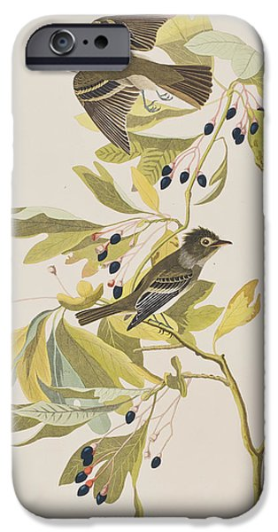 Flycatcher iPhone Cases - Small Green Crested Flycatcher iPhone Case by John James Audubon