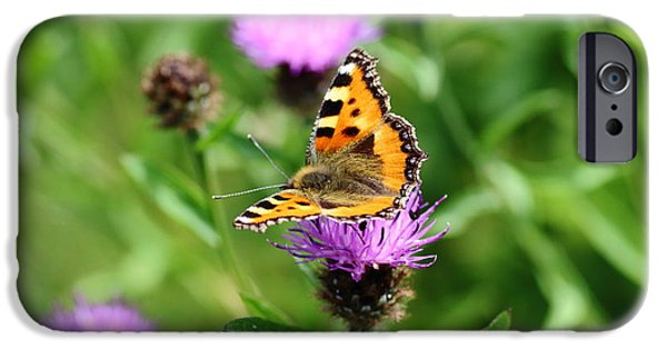 Meadow Photographs iPhone Cases - Small Tortoiseshell Butterfly iPhone Case by Rumyana Whitcher