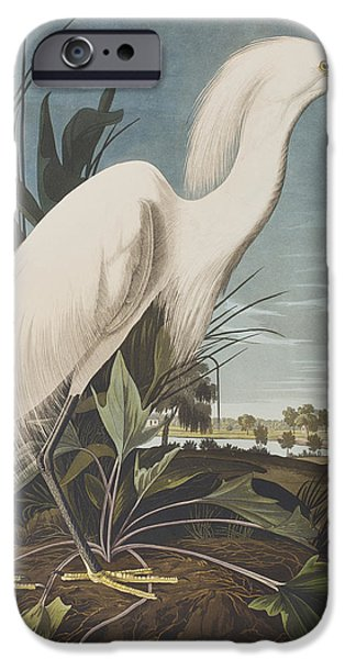 Audubon iPhone Cases - Snowy Heron  iPhone Case by John James Audubon
