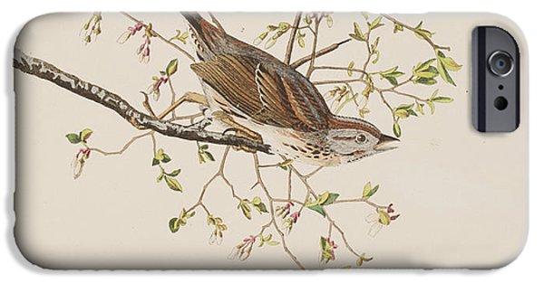 Sparrow iPhone Cases - Song Sparrow iPhone Case by John James Audubon