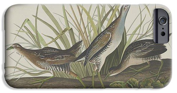 Shorebird iPhone Cases - Sora or Rail iPhone Case by John James Audubon