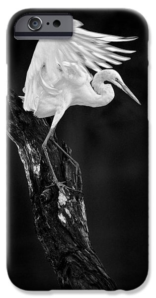 Animals Photographs iPhone Cases - Spread Your Wings iPhone Case by Patrick M Lynch