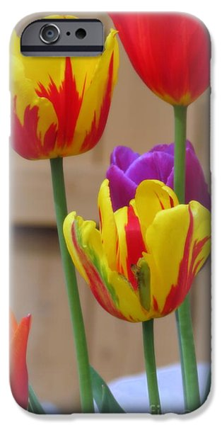 Plant iPhone Cases - Spring Tulips iPhone Case by Kay Novy