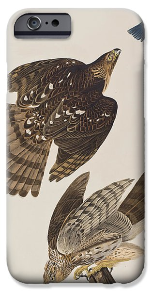 Falcon iPhone Cases - Stanley Hawk iPhone Case by John James Audubon