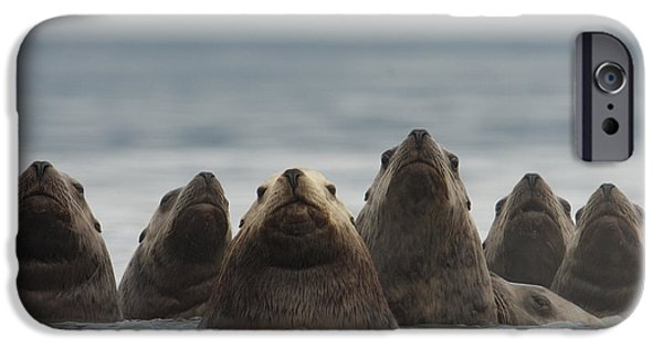 Sea Lions iPhone Cases - Stellers Sea Lion Eumetopias Jubatus iPhone Case by Michael Quinton