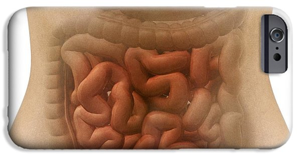 Large Intestine iPhone Cases - Stomach And Intestines, Artwork iPhone Case by Claus Lunau