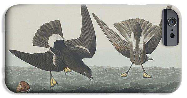 Shorebird iPhone Cases - Stormy Petrel iPhone Case by John James Audubon