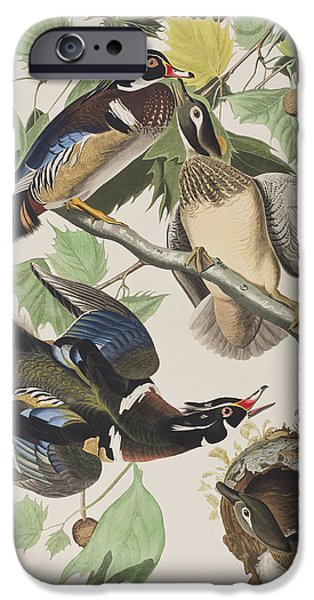 Summer Drawings iPhone Cases - Summer or Wood Duck iPhone Case by John James Audubon