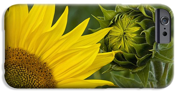 French Open iPhone Cases - Sunflowers In France iPhone Case by Jean-Louis Klein & Marie-Luce Hubert