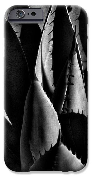Sunlit Cactus iPhone Case by David Patterson