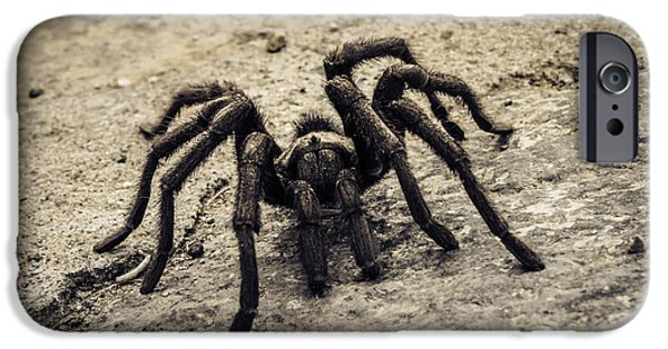 One iPhone Cases - Tarantula iPhone Case by Donna Miller