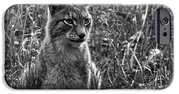 Lynx iPhone Cases - The Elusive Lynx iPhone Case by Andreas Petzold