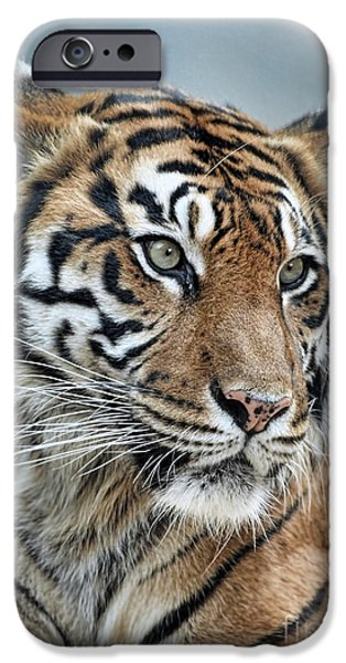Gray Hair iPhone Cases - The Gaze of a Tiger iPhone Case by Jim Fitzpatrick