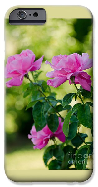 Bloosom iPhone Cases - The Pink Ones iPhone Case by Nick  Boren