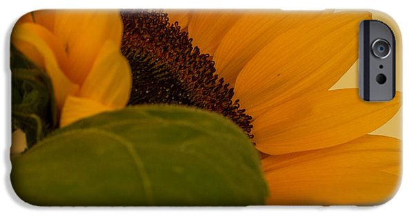 Close Up Floral Pyrography iPhone Cases - The Sunflower iPhone Case by Peteris Vaivars