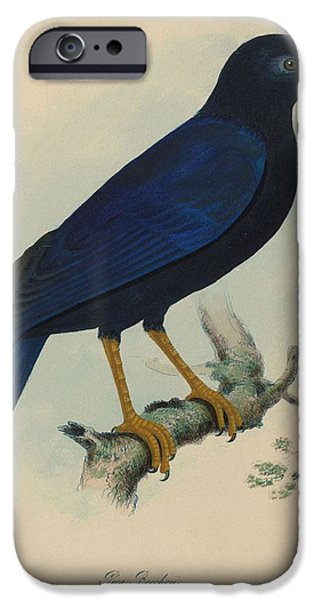 Zoology Paintings iPhone Cases - The zoology of Captain Beecheys voyage iPhone Case by MotionAge Designs