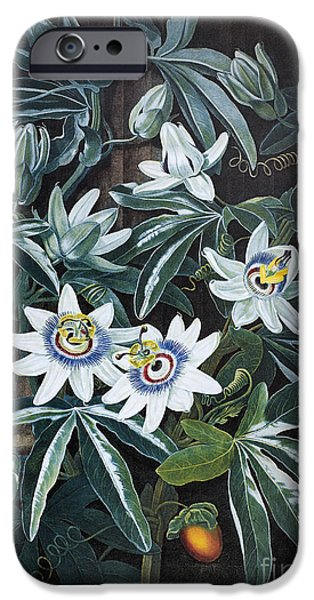 Passiflora iPhone Cases - Thornton: Passion-flower iPhone Case by Granger