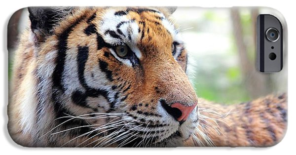 The Tiger iPhone Cases - Tiger Portrait iPhone Case by Mike and Angela Murdock