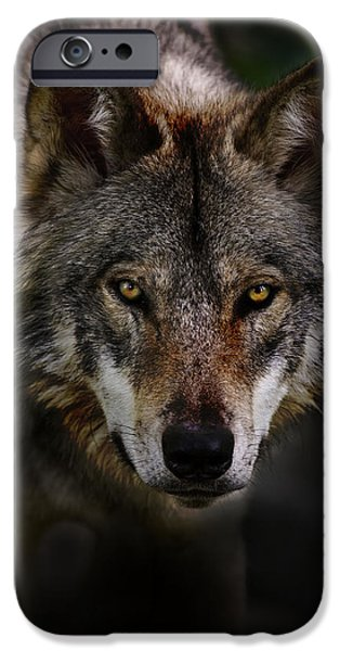 Wolf Pics Mixed Media iPhone Cases - Timber Wolf Portrait iPhone Case by Michael Cummings