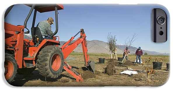 Backhoe iPhone Cases - Tractor Planting Trees iPhone Case by Inga Spence