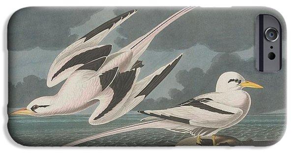 Shorebird iPhone Cases - Tropic Bird iPhone Case by John James Audubon