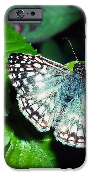 Tropical Checkered Skipper iPhone Case by Thomas R Fletcher