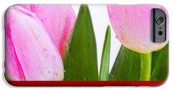 Crops iPhone Cases - Tulip 15 iPhone Case by Ingrid Smith-Johnsen