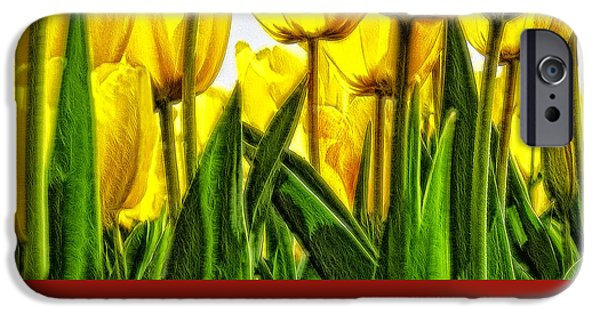 Crops iPhone Cases - Tulip 24 iPhone Case by Ingrid Smith-Johnsen