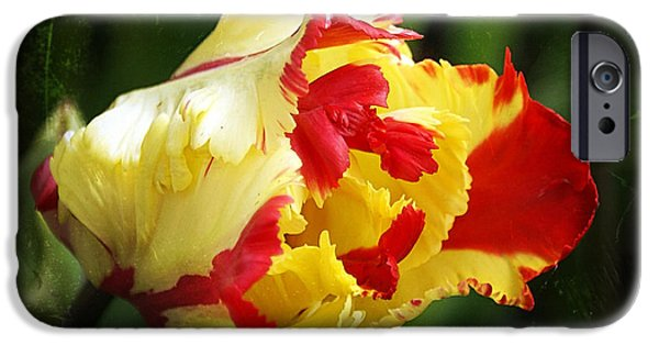 Crops iPhone Cases - Tulip 28 iPhone Case by Ingrid Smith-Johnsen