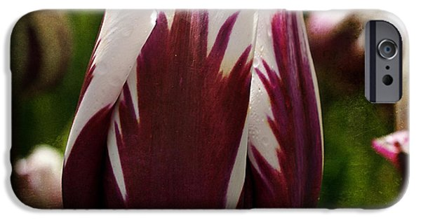 Crops iPhone Cases - Tulip 33 iPhone Case by Ingrid Smith-Johnsen
