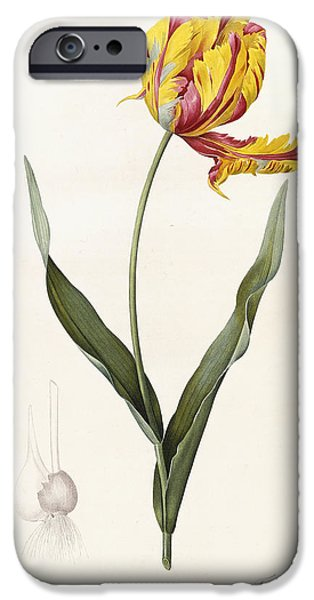 Flora Drawings iPhone Cases - Tulip iPhone Case by Pierre Joseph Redoute