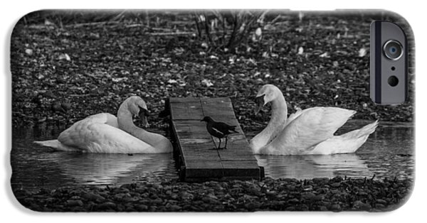 Board iPhone Cases - Two Swans Observing A Bird iPhone Case by Roman Grac