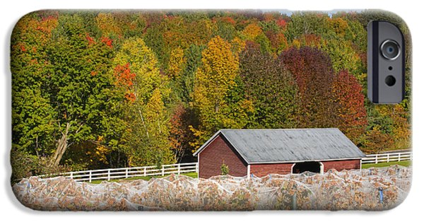 Red Wine iPhone Cases - Vineyard In Autumn  Knowlton, Quebec iPhone Case by David Chapman