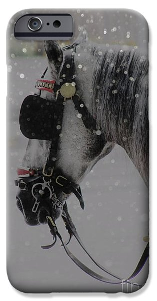 Snow iPhone Cases - Waiting iPhone Case by Clare Bevan