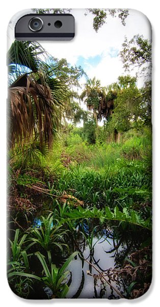 Manatee iPhone Cases - Wetlands of Terra Ceia Preserve  iPhone Case by Rich Leighton