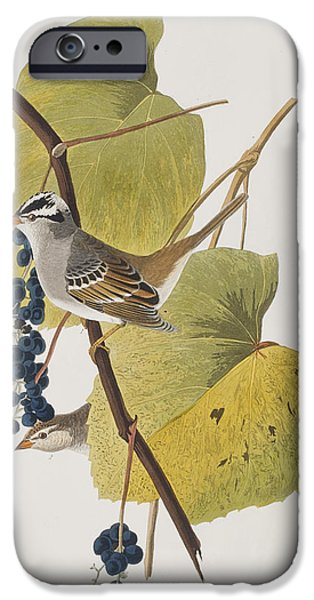 Sparrow iPhone Cases - White-crowned Sparrow iPhone Case by John James Audubon