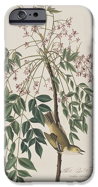 Flycatcher iPhone Cases - White-eyed Flycatcher iPhone Case by John James Audubon